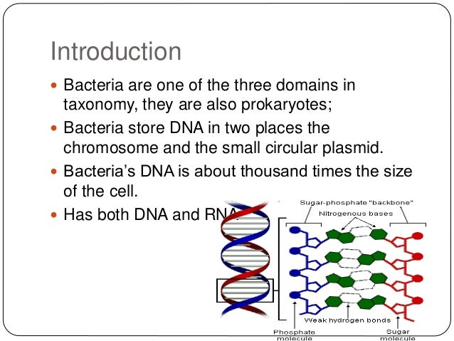 an introduction to the analysis of bacteria Welcome to the web site for an introduction to genetic analysisby anthony j f griffiths, jeffrey h miller, david tsuzuki, richard c lewontin, and william m gelbart.