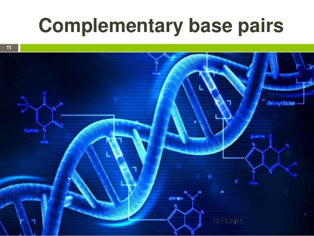 Complementary base pairs 12/15/2015 11