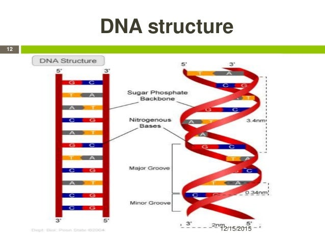 DNA structure 12/15/2015 12