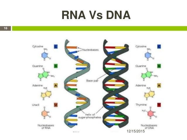 RNA Vs DNA 12/15/2015 16