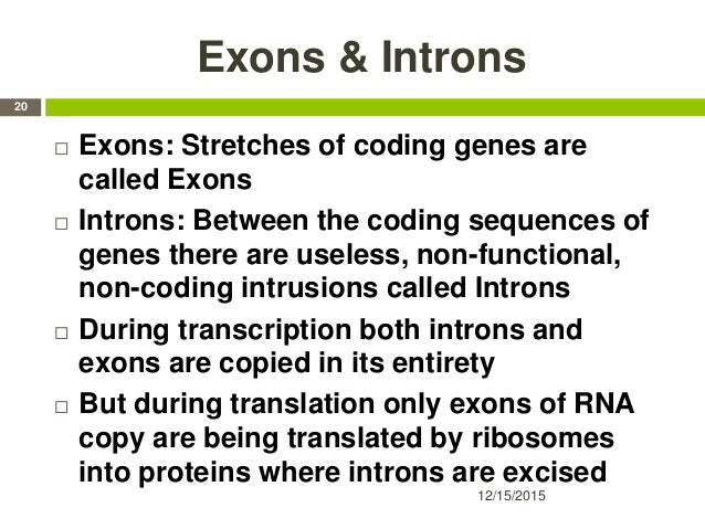 Exons & Introns  Exons: Stretches of coding genes are called Exons  Introns: Between the coding sequences of genes there...