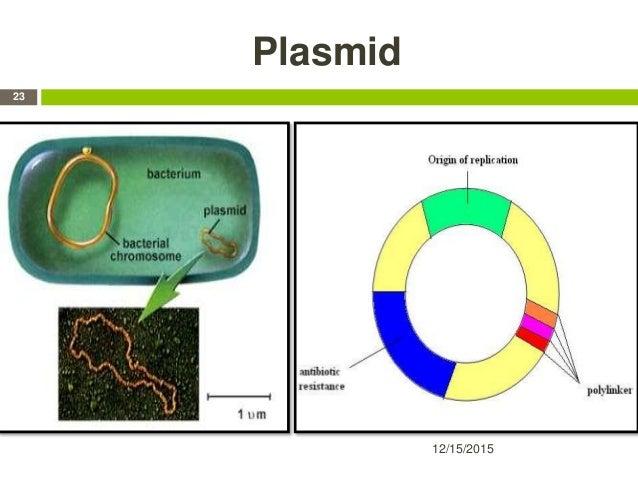 Plasmid 12/15/2015 23
