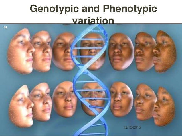 Genotypic and Phenotypic variation 12/15/2015 29