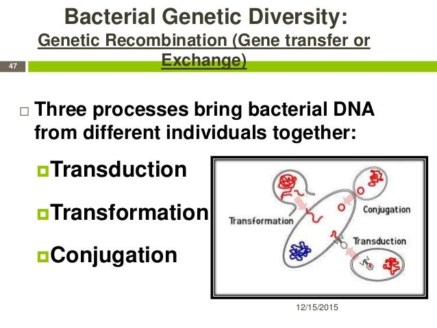Bacterial Genetic Diversity: Genetic Recombination (Gene transfer or Exchange)  Three processes bring bacterial DNA from ...