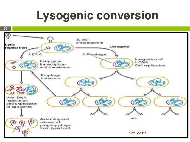 Lysogenic conversion 12/15/2015 56
