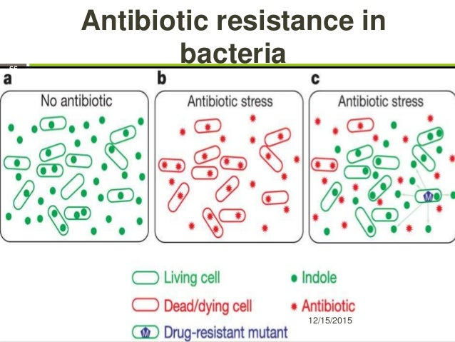 Antibiotic resistance in bacteria 12/15/2015 66