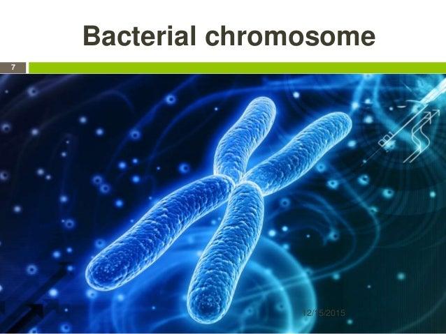 Bacterial chromosome 12/15/2015 7