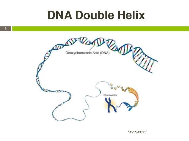 DNA Double Helix 12/15/2015 8