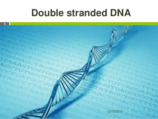 Double stranded DNA 12/15/2015 9