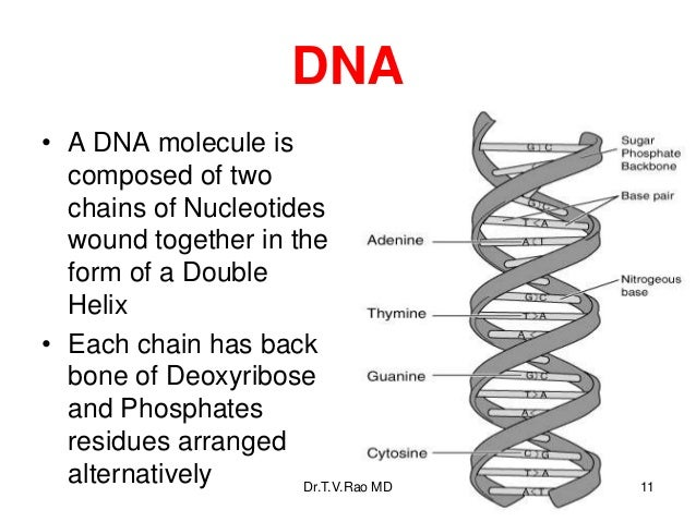 Bacterial genetics. Basics