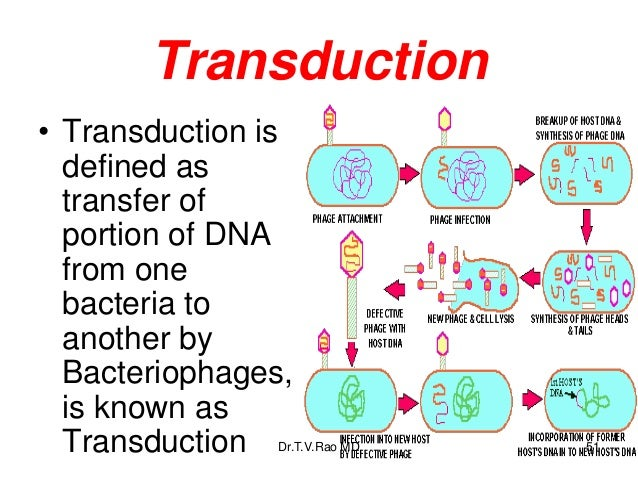 transduction mapping with Bacterial Ge Icsppt Teaching on Chemical Senses Smell And Taste besides Prokaryotic F Factor Transformation Transduction together with 3478 besides Figures further Ge ics980311.