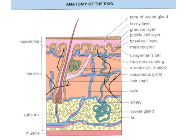 Bacterial infection of the skin  Slide 2
