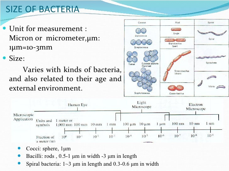 Bacterial morphology 4 size of bacteria ccuart Choice Image