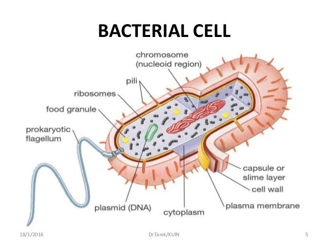bacterial morphology Microbiology: microbiology, the scientific study of microorganisms, a diverse group of generally minute, simple life-forms, including bacteria, algae, fungi, protozoa .