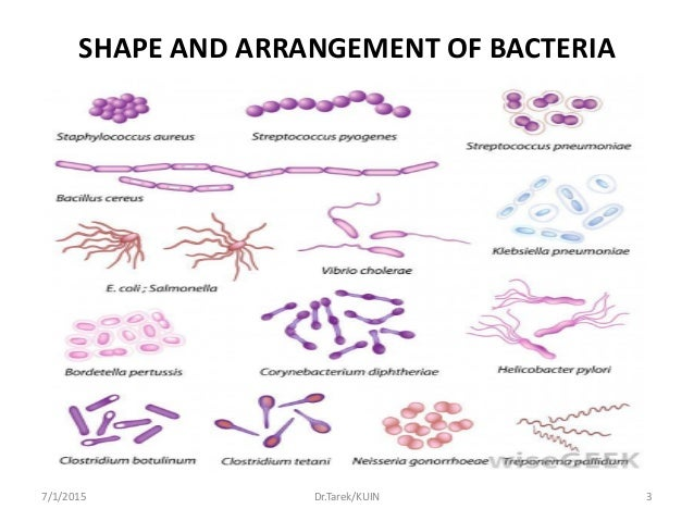 an overview of bacteria and kochs role in medical bacteriology Isolation, contamination, and pure culture: monomorphism and polymorphism of pathogenic micro-organisms as research problem 1860-1880.