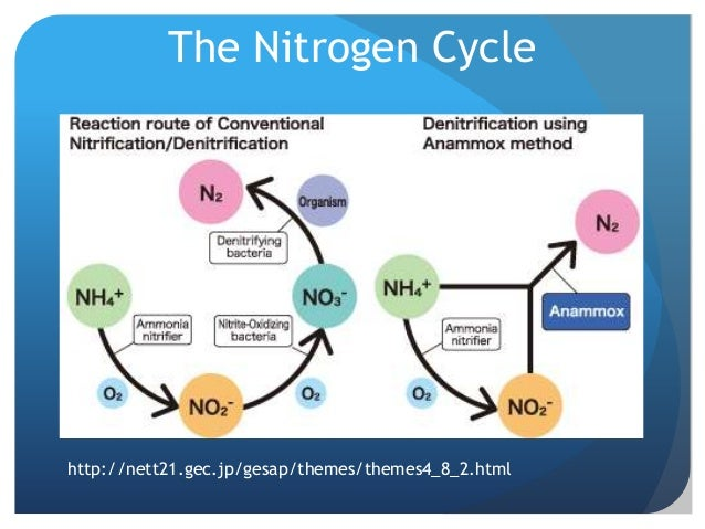 the nitrogen cycle essay Nitrogen essays nitrogen is nonmetallic, odorless, colorless, and tasteless gas nitrogen makes up about 78% of the earth's atmosphere rutherford discover nitrogen in 1772 on the periodic table of elements nitrogen is diatomic and has the chemical symbol of n the atomic nu.