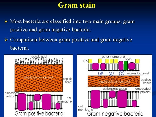 bacterial cell wall staining pdf