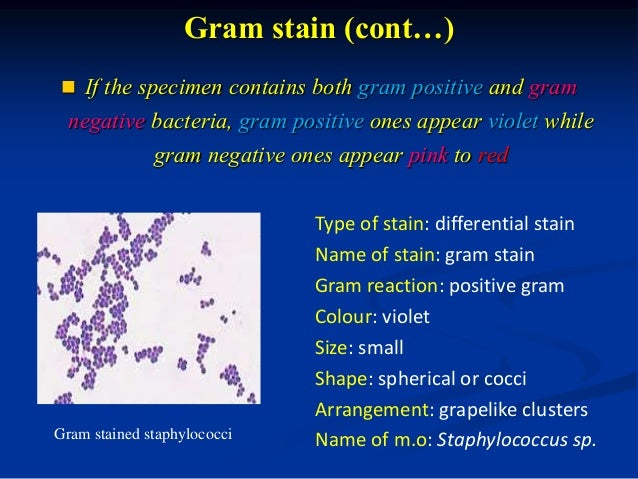 staining bacteria and stain Lab report about simple staining of microbes bacteria are slightly negatively charged at ph 70 and basic dye stains bacteria while acidic dye stains background.
