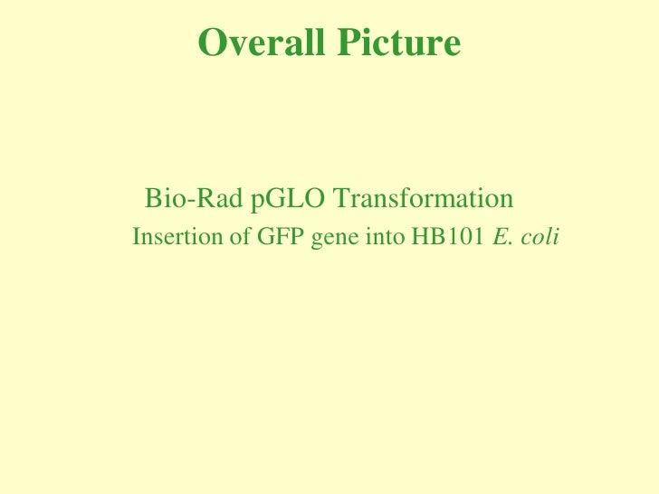 Overall Picture    Bio-Rad pGLO Transformation Insertion of GFP gene into HB101 E. coli