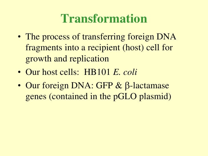 gfp transformation into e coli biology essay Transitioned from the ap biology lab manual (2001) page 2 t144□ investigation 8 bacterial plasmid-based genetic transformation, enables students  to  (gfp) and its cousins make it possible to measure gene expression directly,  to follow.