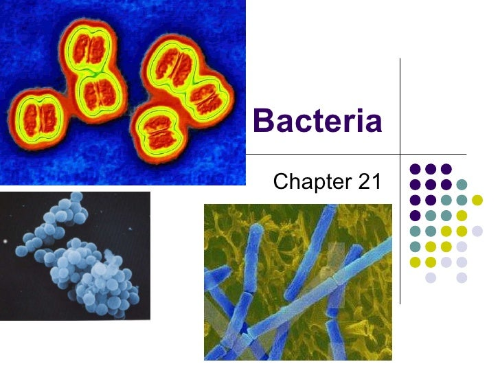 Bacteria Chapter 21