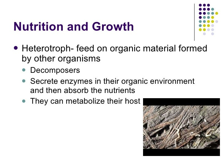 Bacteria Power Point