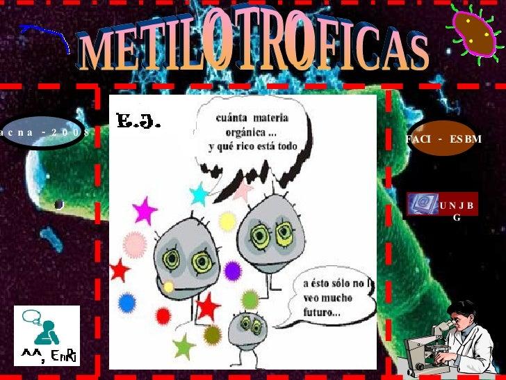 Tacna - 2008 FACI - ESBM METILOTROFICAS UNJBG
