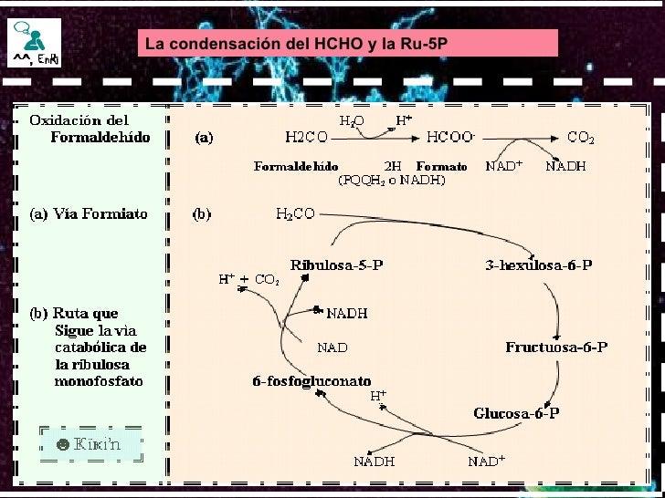 La condensación del HCHO y la Ru-5P