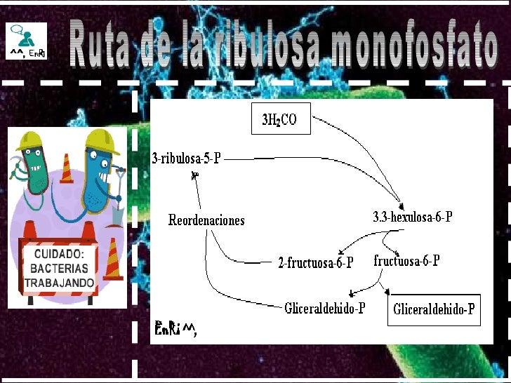 Ruta de la ribulosa monofosfato