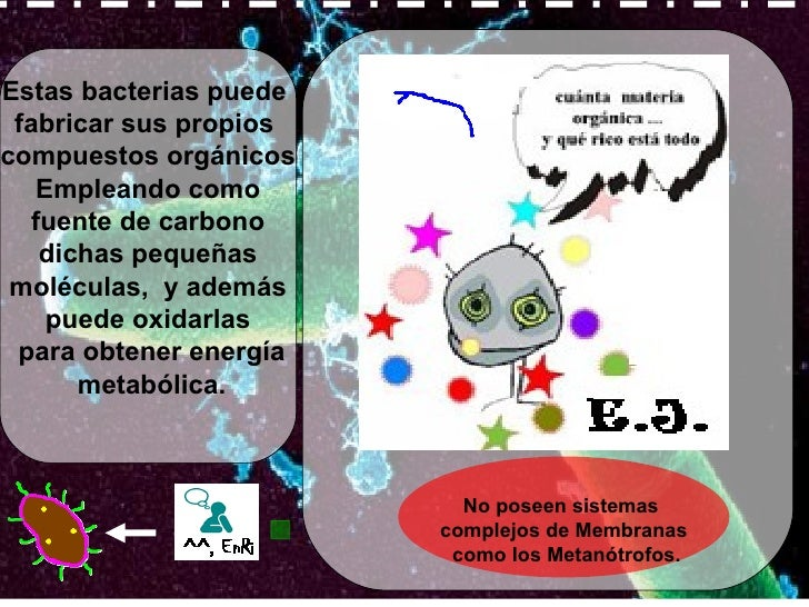 Estas bacterias puede  fabricar sus propios  compuestos orgánicos Empleando como fuente de carbono  dichas pequeñas molécu...