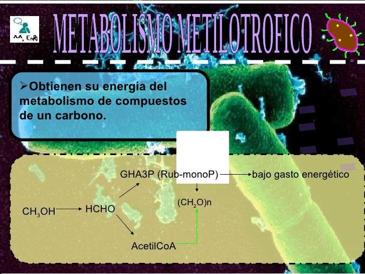<ul><li>Obtienen su energía del metabolismo de compuestos de un carbono. </li></ul>METABOLISMO METILOTROFICO CH 3 OH HCHO ...