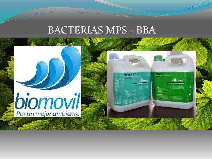 BACTERIAS MPS - BBA<br />