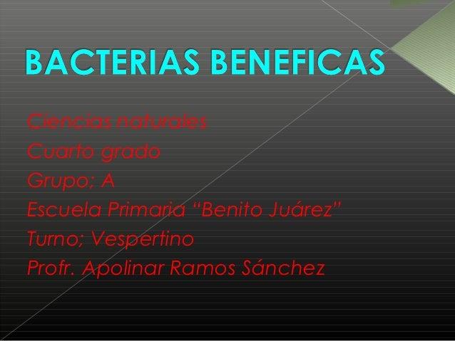 """Ciencias naturalesCuarto gradoGrupo; AEscuela Primaria """"Benito Juárez""""Turno; VespertinoProfr. Apolinar Ramos Sánchez"""