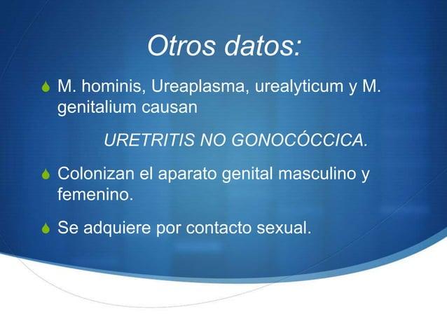Otros datos:S M. hominis, Ureaplasma, urealyticum y M.  genitalium causan       URETRITIS NO GONOCÓCCICA.S Colonizan el ap...