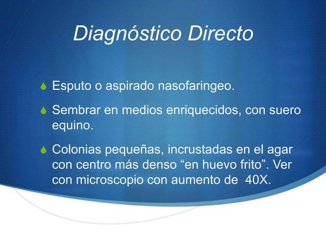 Diagnóstico DirectoS Esputo o aspirado nasofaringeo.S Sembrar en medios enriquecidos, con suero  equino.S Colonias pequeña...