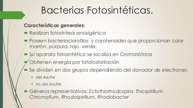 Bacterias fotosinteticas Slide 2