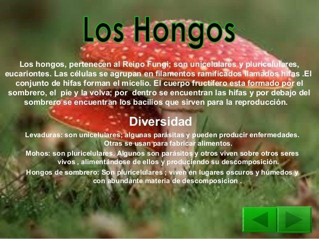 El hongo de las uñas de los pies onihomikoz