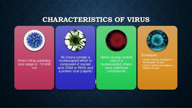 Bacteria Virus