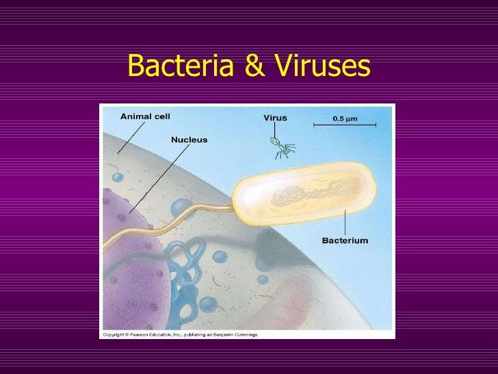Bacteria & Viruses Prokaryotes and Beyond