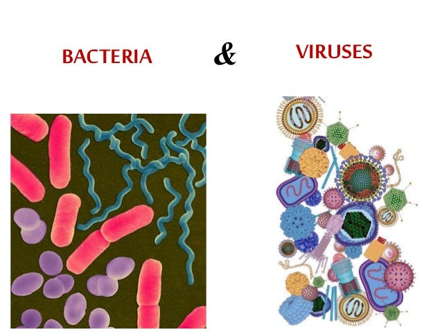 virus and bacteria
