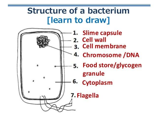 Bacteria Virus Structure Structure Diagrams Auto Wiring Diagram
