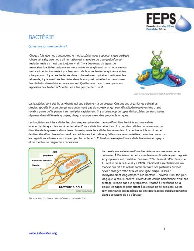 1 www.safewater.org BACTÉRIE Qu'est-ce qu'une bactérie? Les bactéries sont des êtres vivants qui appartiennent à un groupe...