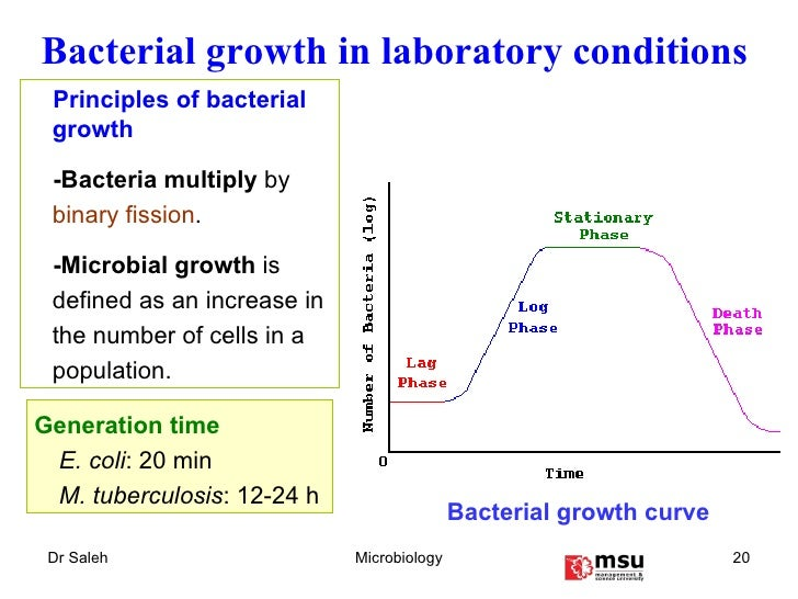 bacterial growth The cell cycle - dna synthesis and segregation when one considers the large size of the bacterial chromosome, relative to the cell, and its complex.