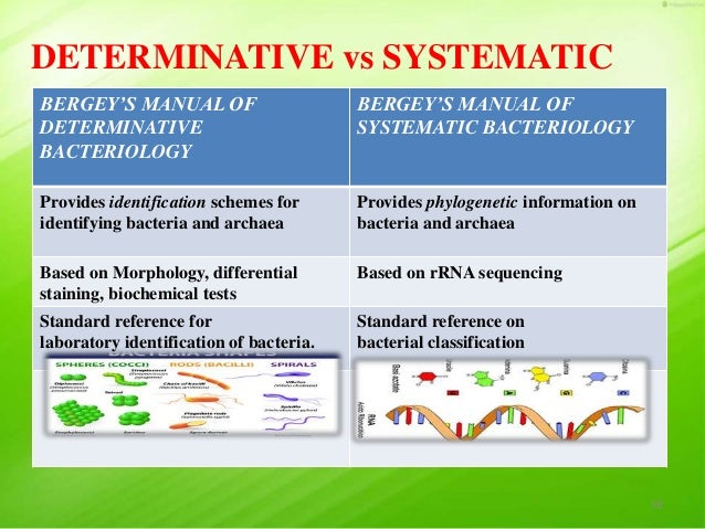 taxonomy of bacteria bergey s manual of systematic bacteriology and rh slideshare net bergey's manual of determinative bacteriology 9th edition citation bergey's manual of determinative bacteriology 9th edition pdf free download