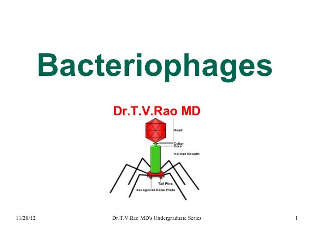 Bacteriophages               Dr.T.V.Rao MD11/20/12       Dr.T.V.Rao MDs Undergraduate Series   1