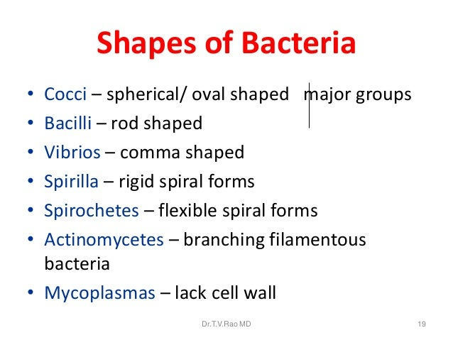 Bacteriology basics morphology classification staining methods 19 shapes of bacteria ccuart Images