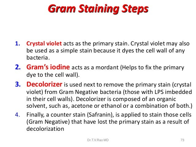 what is the purpose of crystal violet in the gram s stain procedure Gram stain or gram staining, also called gram's method, is a method of staining used to distinguish and classify bacterial species into two large groups (gram-positive and gram-negative) the name comes from the danish bacteriologist hans christian gram , who developed the technique.
