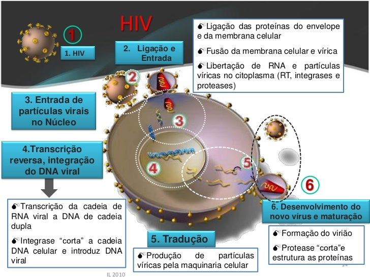 1                            HIV                   Ligação das proteínas do envelope                                     ...