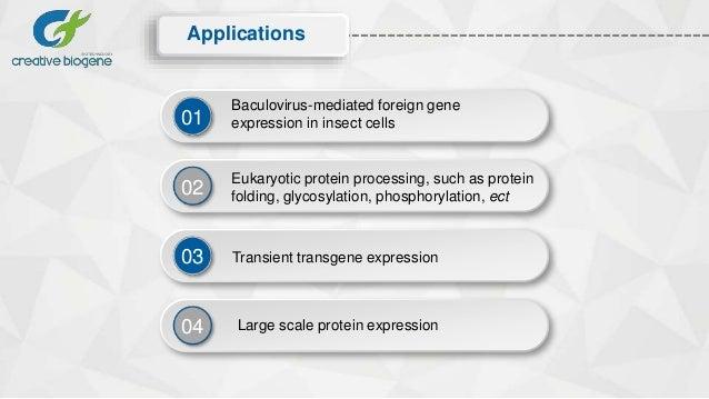 Baculovirus expression service