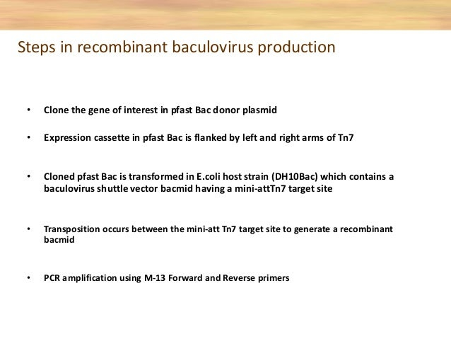 Transform recombinant plasmid in to DH10BACTM competent cells which contain the Bacmid •Mini-Tn7 element on the pFASTBAC p...